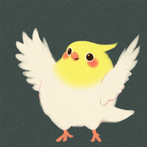 Bird - Animal
