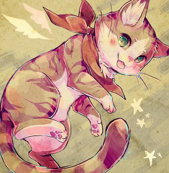 Cat - Animal