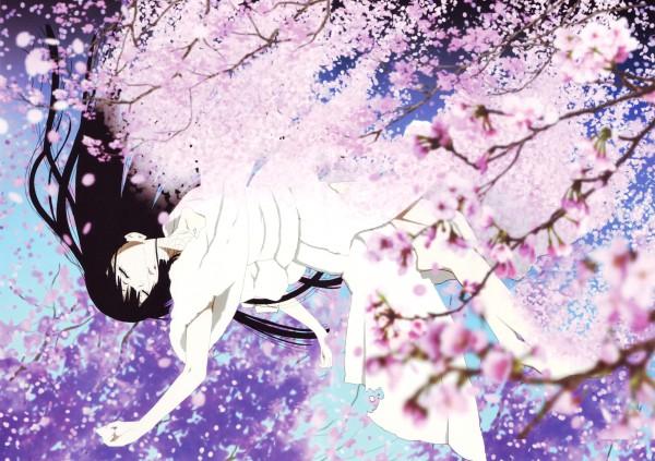 Cherry Blossom - Flower
