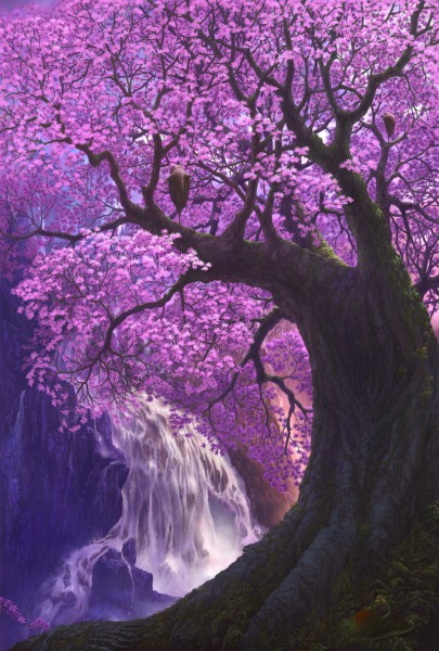 Cherry Tree - Tree