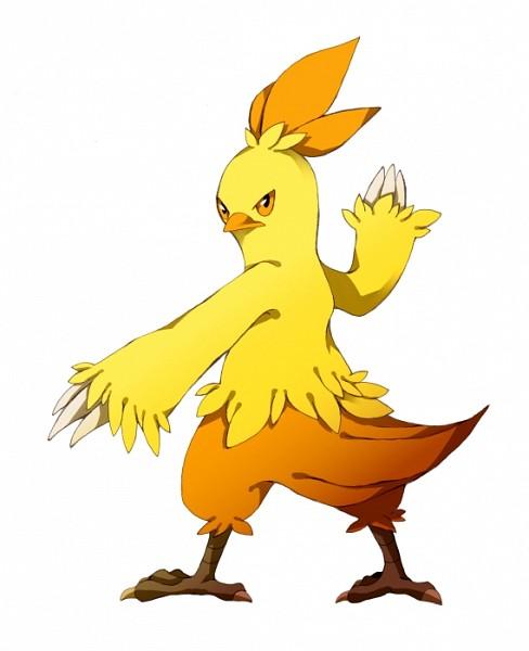 Combusken - Pokémon - Zerochan Anime Image Board