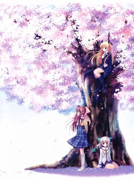 Tags: Anime, Da Capo, Da Capo II, Yoshino Sakura, Aisia, Asakura Otome