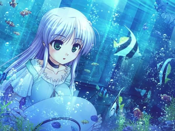Tags: Anime, Yoake Mae yori Ruriiro na, Feena Fam Earthlight, Aquarium
