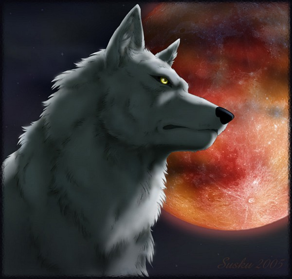 Tags: Anime, Wolf's Rain, Kiba (Wolf's Rain)