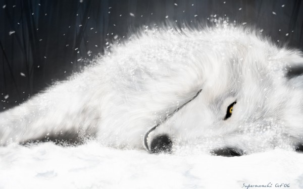 Tags: Anime, Wolf's Rain, Kiba (Wolf's Rain), Wallpaper