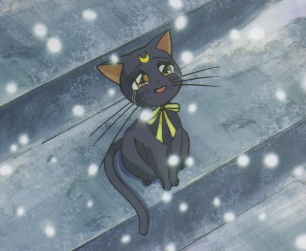 Tags: Anime, Bishoujo Senshi Sailor Moon, Luna (Sailor Moon), Screenshot