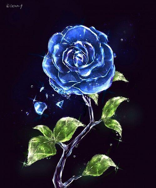 Rose (Flower) - Flower