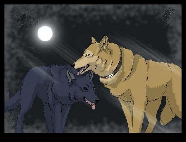 Tags: Anime, Wolf's Rain, Blue (Wolf's Rain), Hige